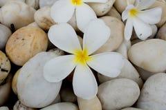 Frangipani flowers on stone Stock Images