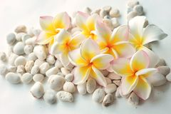 Frangipani flowers with stone in white background Stock Photography