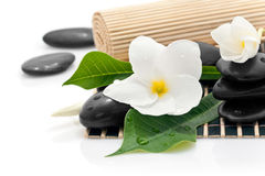 Frangipani flowers and stones Royalty Free Stock Image