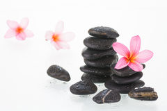 Frangipani flowers and stones Stock Image