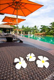 Frangipani flowers in the swimming pool Royalty Free Stock Image
