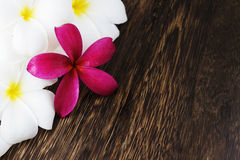Frangipani flowers on top of wooden Stock Photo