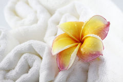 Frangipani flowers and Towel for spa Royalty Free Stock Photo