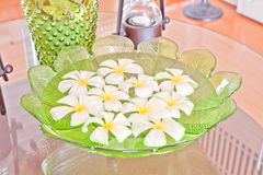 Frangipani flowers in the water of green leaf bowl Stock Photo