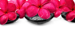 Frangipani flowers with zen stone Stock Image