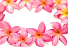 Frangipani frame Royalty Free Stock Photography