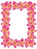 Frangipani frame. Floral frame made from plumeria, frangipani flowers Royalty Free Stock Image