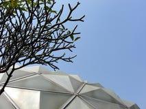 Frangipani and glasshouse roof Royalty Free Stock Photos