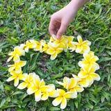 Frangipani jaune disposé dans une forme de coeur Le jour d'herbe verte de l'amour pour la dame de main d'été de nature Photographie stock libre de droits
