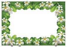 Frangipani kwiatów granica zdjęcia stock