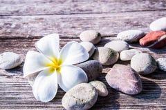 Frangipani kwiat Zdjęcia Royalty Free