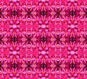 Frangipani kwiat Fotografia Royalty Free