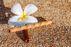 Frangipani kwiat na piaskowatej podłoga z słodkim smakiem zdjęcia royalty free