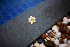 Frangipani lying on a rock. On the edge of the pool Stock Photo