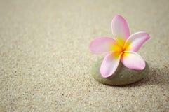 Frangipani o flor del plumeria en un ZEN Stone con el espacio de la copia Fotografía de archivo