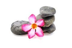 Frangipani och Zen Stone Arkivfoto