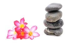 Frangipani och Zen Stone Arkivfoton