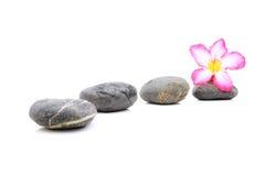 Frangipani och Zen Stone Royaltyfri Fotografi