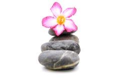 Frangipani och Zen Stone Royaltyfri Foto
