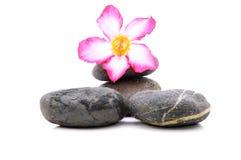 Frangipani och Zen Stone Royaltyfri Bild