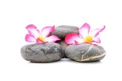 Frangipani och Zen Stone Arkivbilder