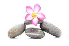 Frangipani och Zen Stone Royaltyfria Foton