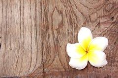 Frangipani op hout Stock Foto
