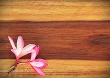 Frangipani på trä Fotografering för Bildbyråer