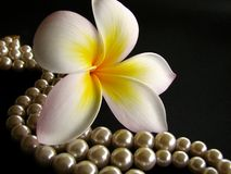 Frangipani with Pearls 3 Stock Images