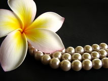 Frangipani with pearls. Frangipani flower macro with pearls isolated on black  background Royalty Free Stock Image