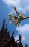 Frangipani Plumeria bloeit en het Heiligdom van Waarheidtempel in Pattaya, Thailand Stock Afbeelding