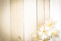 Frangipani plumeria flower in soft color and blur style on white wooden Stock Photography