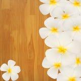 Frangipani  Plumeria flower on wood background Royalty Free Stock Photo