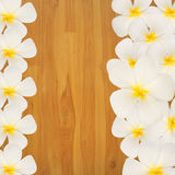 Frangipani  Plumeria flower on wood background Stock Images