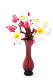 Frangipani (Plumeria) flowers Stock Photos