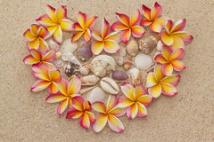 Frangipani, plumeria flowers in shape of heart. Group of frangipani, plumeria flowers in shape of heart, filled with sea shells, on sand Royalty Free Stock Photos