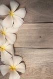 Frangipani (plumeria) na drewnianym stole na morwa papieru teksturze Fotografia Royalty Free