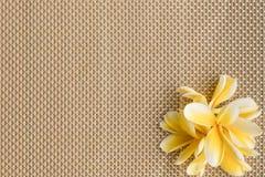 Frangipani/plumeria op placematachtergrond stock fotografie