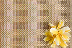 Frangipani/plumeria på placematbakgrund arkivbild