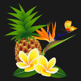 Frangipani Plumeria with a paradise flower and a butterfly, with pineapple on a black background. Stock Photo