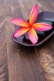 frangipani plumeria spa πέτρα τροπική Στοκ εικόνα με δικαίωμα ελεύθερης χρήσης