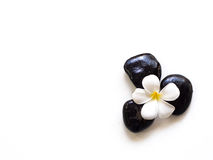 Frangipani plumeria Spa Flower with massage stones Royalty Free Stock Photos