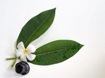 Frangipani plumeria Spa Flower with massage stones Stock Images