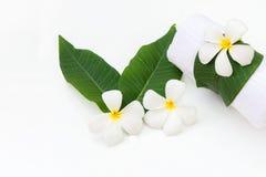 Frangipani plumeria Spa Flower on white wooden.  Thai Spa. Royalty Free Stock Photo