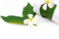 Frangipani plumeria Spa Flower on white wooden.  Thai Spa Royalty Free Stock Images