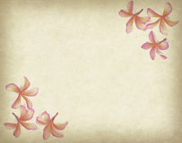 Frangipani or plumeria tropical flower with old grunge Stock Photos
