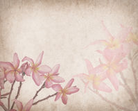 Frangipani or plumeria tropical flower with old paper Stock Images