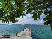 Frangipani, Plumeriabaum neben Strand auf Koh Sichang, Chonburi, Stockbild