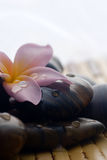 Frangipani and polished stone Stock Images