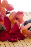 Frangipani and polished stone Royalty Free Stock Photos